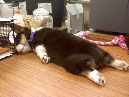 agotado